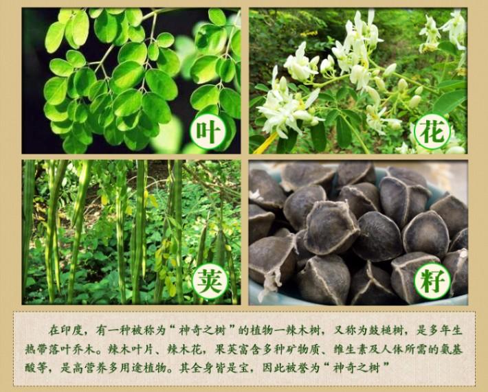 三高克星排毒抗癌来自印度神奇之树--辣木籽