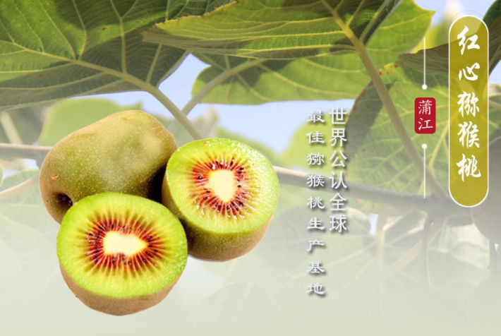 团购四川蒲江红心猕猴桃